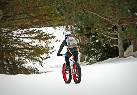 Giants Ridge fat biking