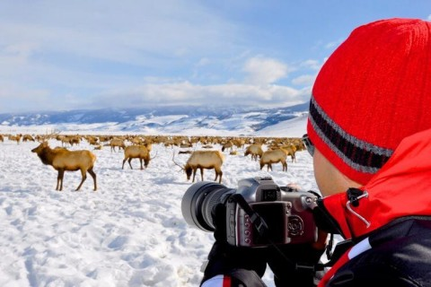 Get some wildlife photography while skiing and riding at Jackson Hole.