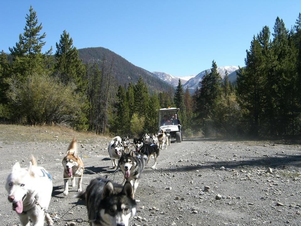 Who know dog sleds ran in the summer? (Breckenridge Resort)