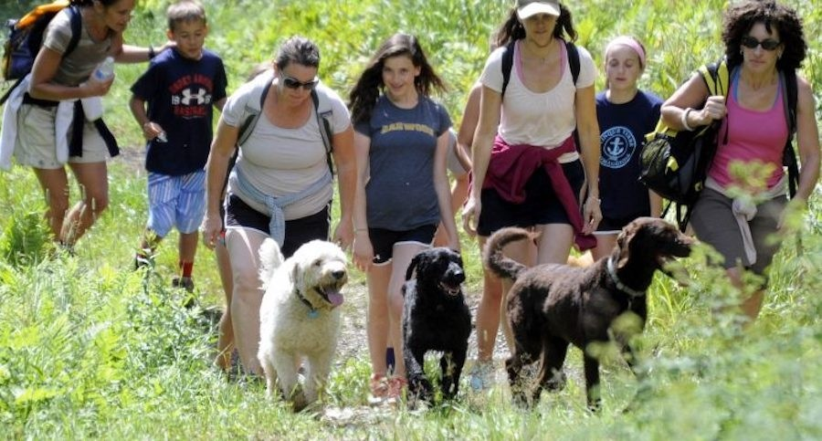 The pups enjoy the hike too at Mad River Glen. (Mad River Glen)