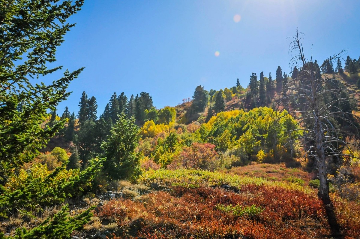 Colors abound at Snowbasin. (Snowbasin)
