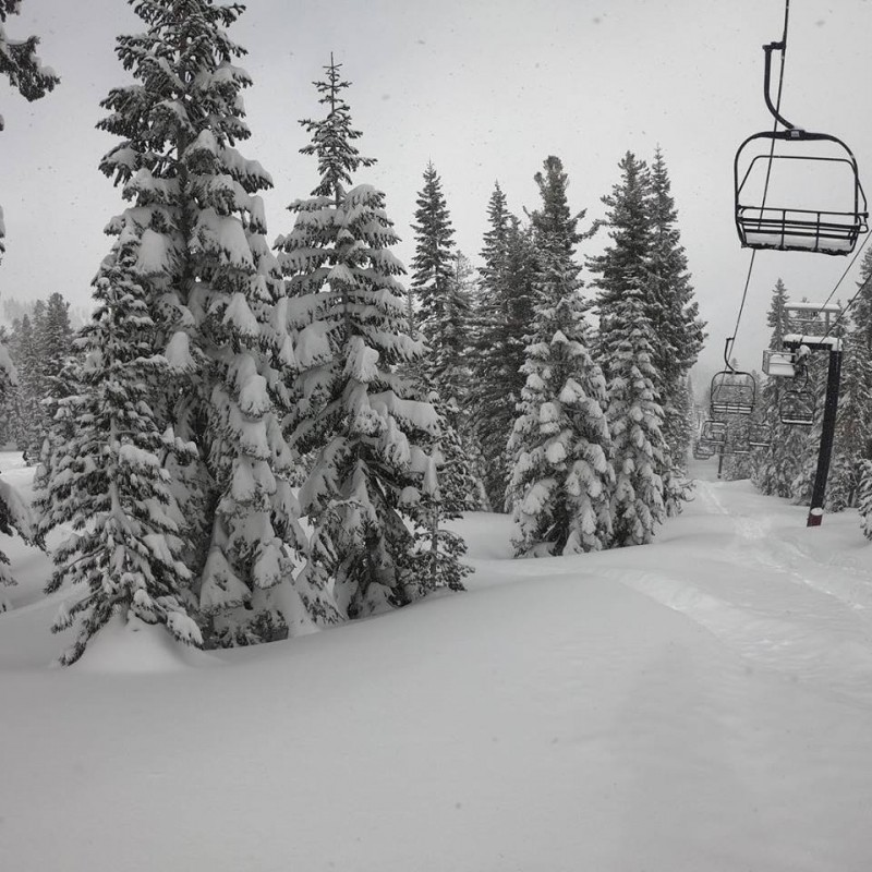 Trees hang heavy with snow at Northstar. (Northstar/Facebook)