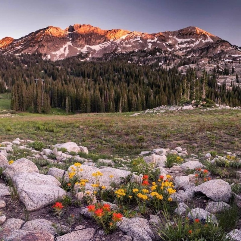 Deep snowpack bodes well for wildflower lovers all over the West. (Alta/Facebook)